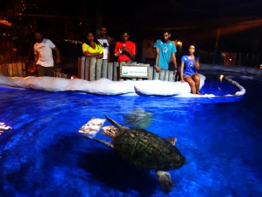 Aquário de tartarugas marinhas - Oceanário Aracaju - SE