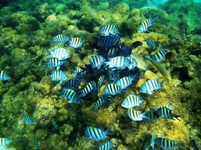 Peixes coloridos em Maragogi