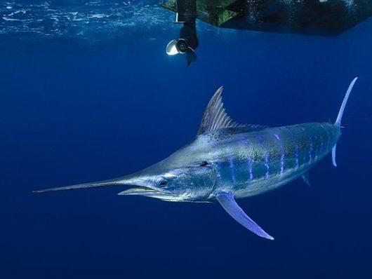 Pesca Oceânica em Vitória - ES