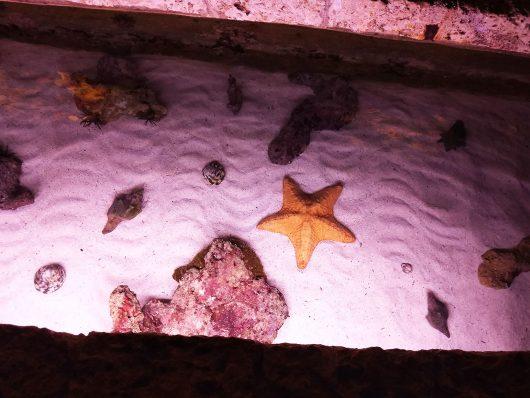 Estrela do mar no Xcaret