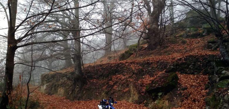Yamaha TTR en otoño