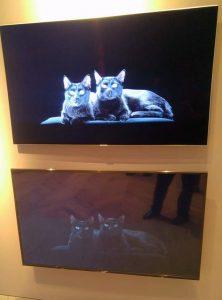 Samsung anuncia suas novas TVs Premium, os modelos QLED TV