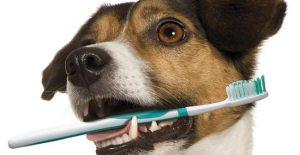 Saúde bucal dos animais domésticos requer cuidados