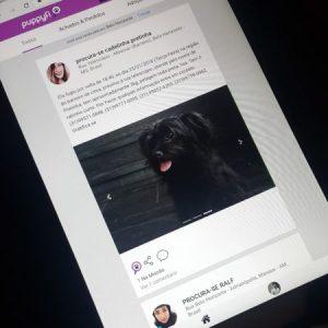Rede social que já localizou mais de 3500 animais perdidos chega ao Brasil