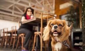 Conheça sete dicas para facilitar o passeio do dia a dia com seu pet
