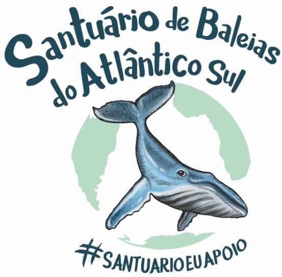 Baleias são 100% protegidas no Brasil há mais de 30 anos