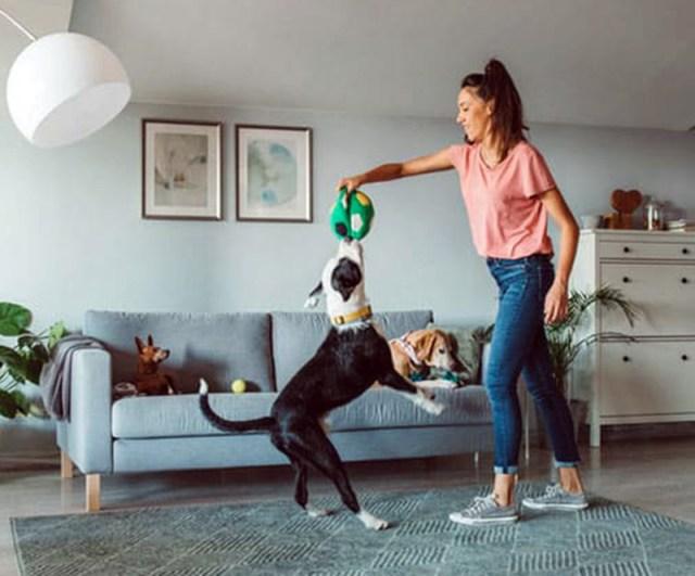Conheça brincadeiras para fazer com seu pet em casa