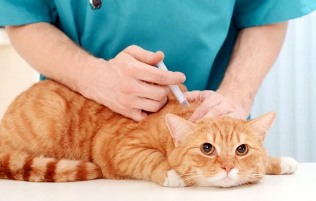 Você tem pets? Veja o calendário de vacinas!