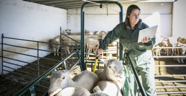Pequenos Ruminantes - veterinária Ana Simões - Vida Rural  (1)