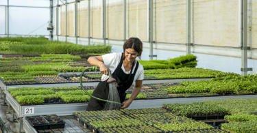 Microvegetais e flores comestíveis à medida dos chefs