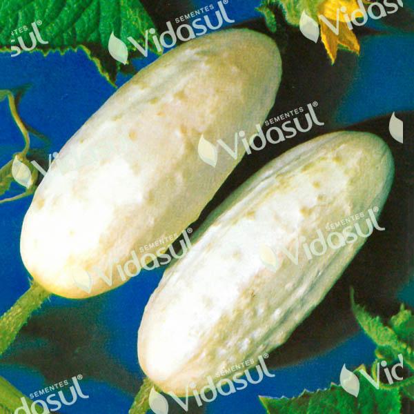 Pepino Branco