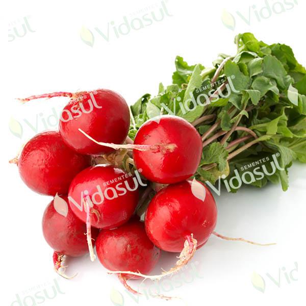 Rabanete Redondo Vermelho Precoce