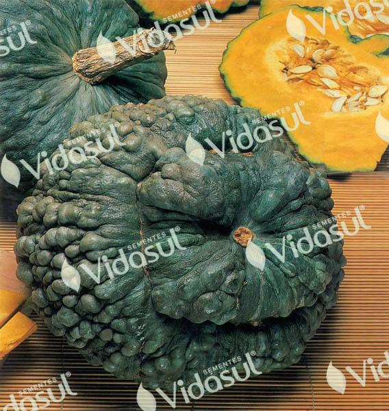 Abóbora Zucchini Redonda