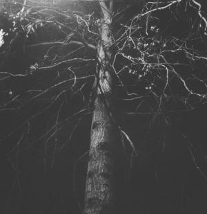 Tree By Dia Lacina