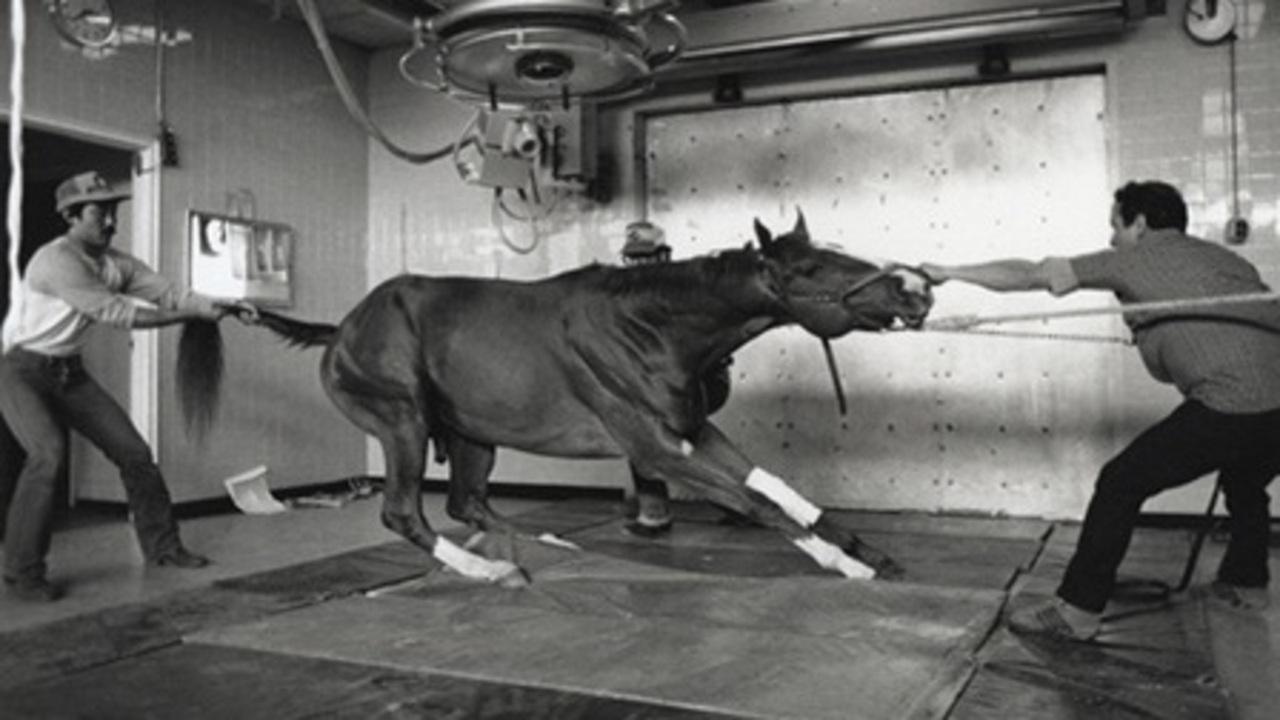 Racetrack – Frederick Wiseman