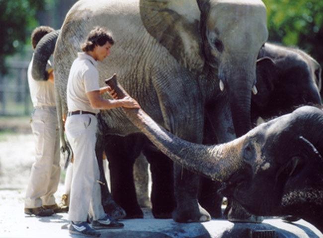 Zoo – Frederick Wiseman