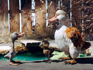 vilain-petit-canard-img