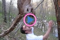 alberi-magici-madre-natura