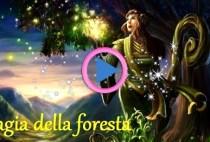 magia-del-bosco-rituale-armonia-energia