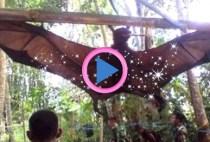 pipistrello gigante