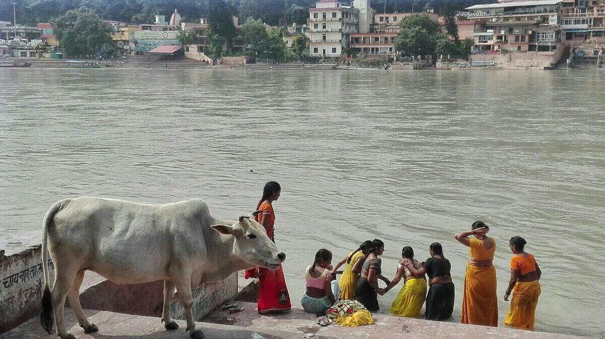 Videonauts backpacking Indien Rishikesh III