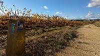 November_Camino10