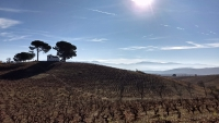 November_Camino34