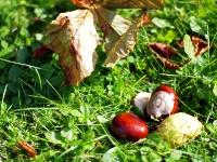 Videonauts Herbst in 50mm Festbrennweite