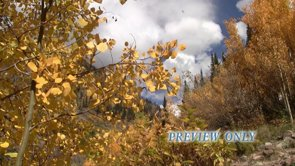 Gold Autumn Foliage Video Loop