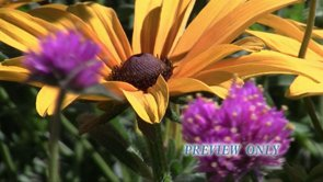 Yellow and Purple Fall Flowers Motion