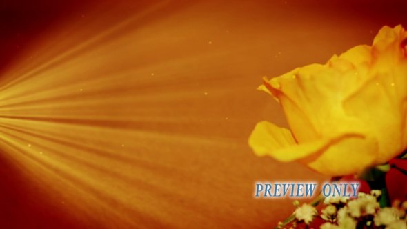 Yellow Rose Motion Backgroung