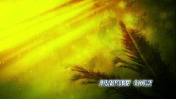Palm Sunday Branch Motion Background