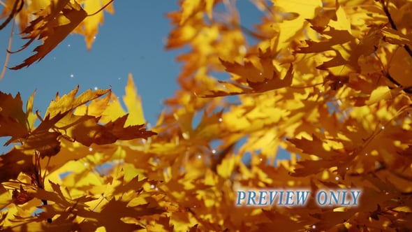 Autumn Golden Leaves Video