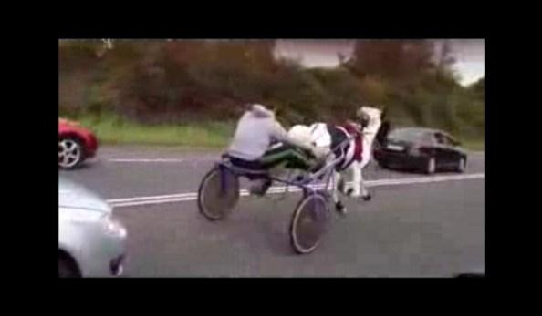 ET-course-hippique-sur-l-autoroute