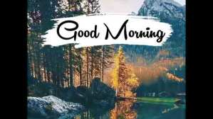 Read more about the article Good Morning Whatsapp Status Video Feel The MooD