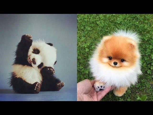 Cute Baby Animals Videos Cutest Animals Videothiki