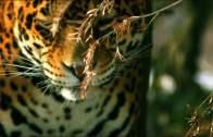 The Wildlife Of Argentina
