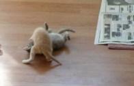 Kitten Surprise! – How To Break Up A Cat Fight!