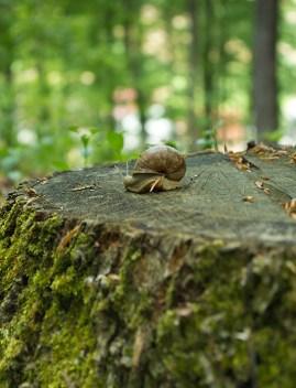 Puž na panju - snail