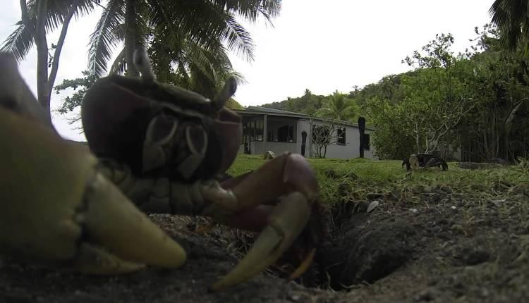 A Crab Steals Off A Camera