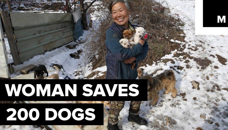 A Woman Saves 200 Dogs