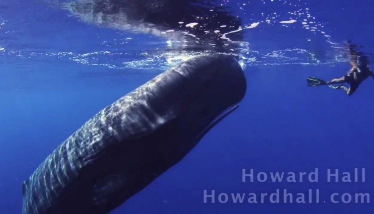 Amazing Encounter With A Whale