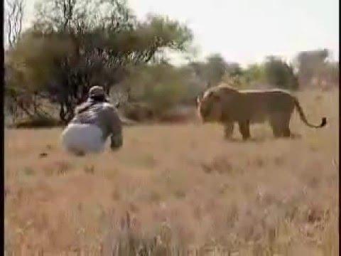 An Idiot vs Lion