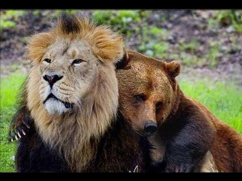 Animal Friendship Between Different Species