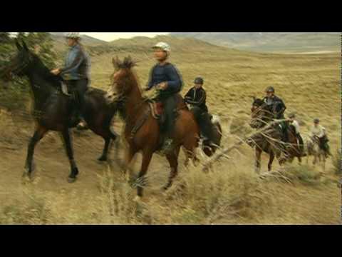 Arabian Silk: Horses of Endurance