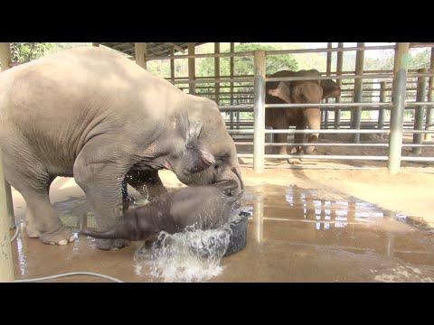 Baby Elephants Adorable Bath Time