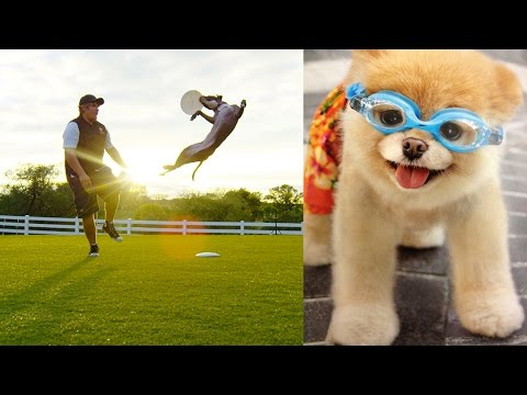 Dogs Doing Tricks Like Superheroes