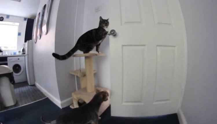 Funny Cat Opens Door For Dog