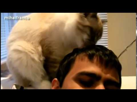 Funny Cats Grooming Humans