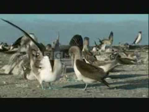 Funny Courtship Dances Of Our Feathered Friends